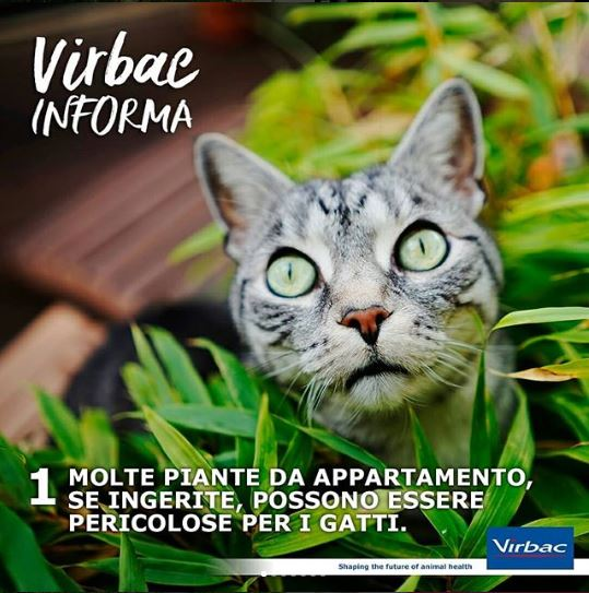 Piante Da Appartamento Tossiche Per I Gatti.Gatti E Piante Tossiche