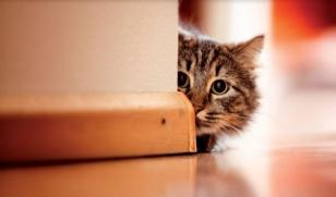 Virbac-stress-ansia-gatto.jpg