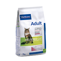 Adult Neutered cat - Gatto
