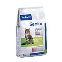 Senior Neutered cat - Gatto